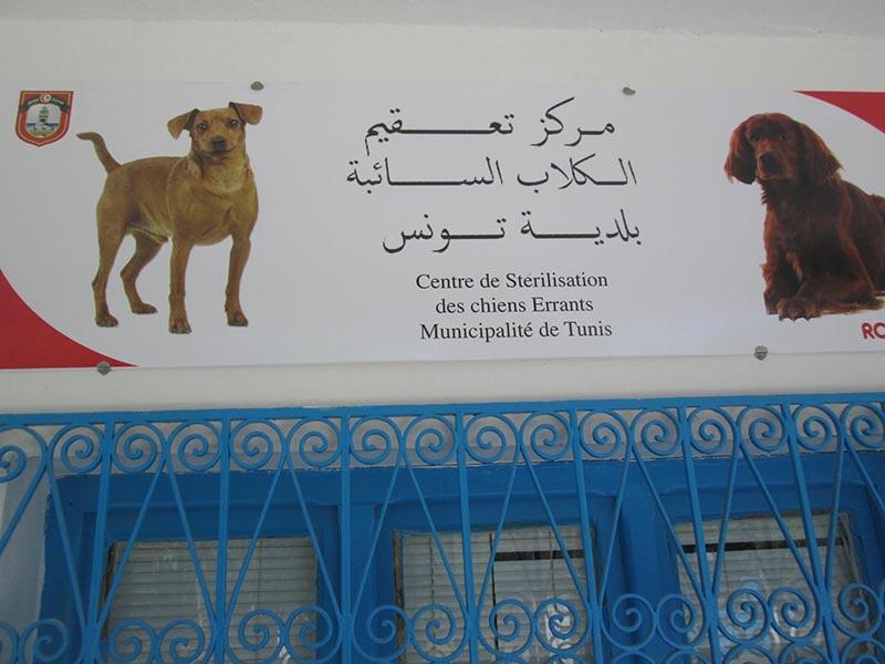 بالصور: إحداث مركز تعقيم الكلاب السائبة بإدارة حماية المحيط الحضري ببلدية تونس
