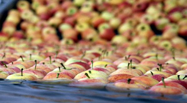 مسؤول فرنسي يتطاول على الجزائر بسبب التفاح