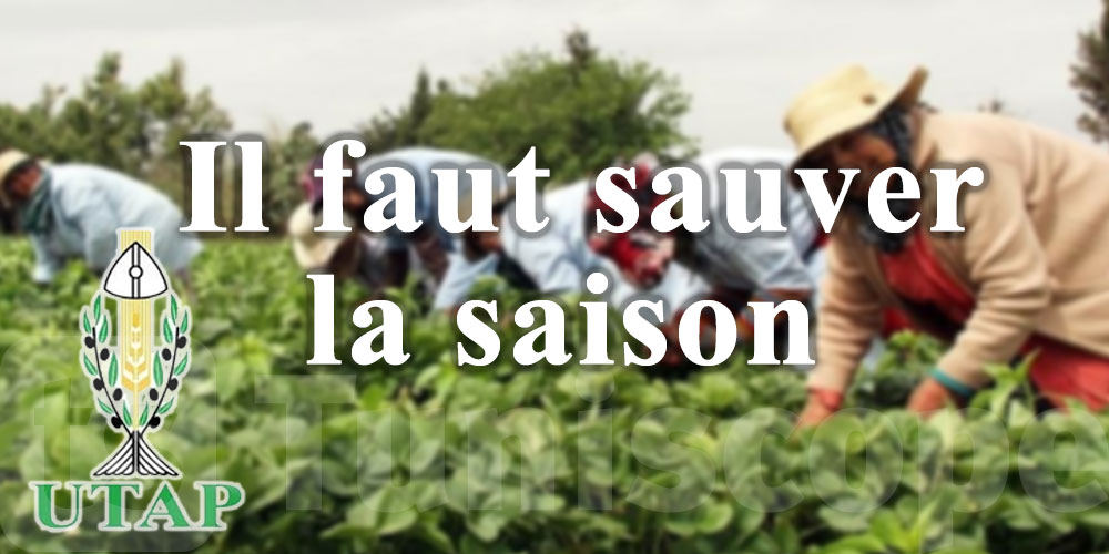 L'UTAP appelle le ministère de l'Agriculture à prendre des mesures urgentes pour sauver la saison