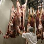 Kébili : Suspension de l'abattage de bétail