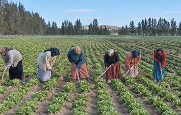 Béja: 17 microcrédits accordés dans le cadre du programme d'autonomisation des femmes