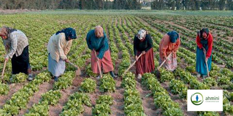L'affiliation sociale de 2400 femmes rurales bloquée pour cause de bureaucratie