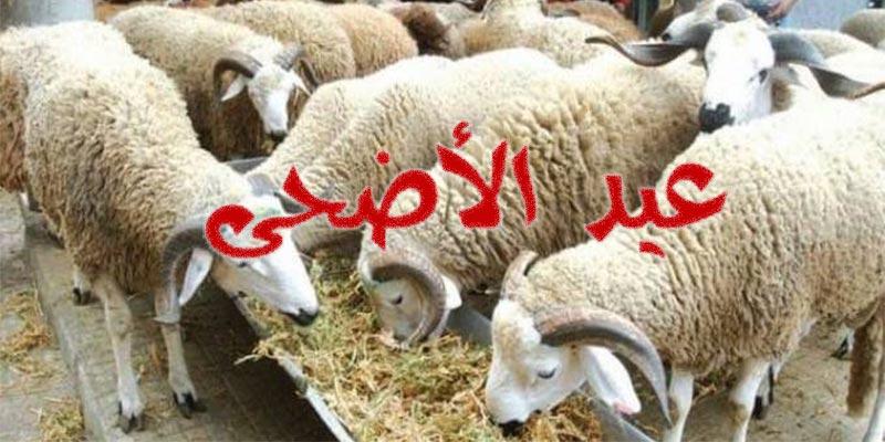رسميّا: هذه أسعار علوش العيد لهذه السنة