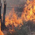 الكاف:حريق جبل سيف يتلف 23 هك من الصنوبر الحلبي