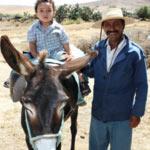 Les ânes en Tunisie ont maintenant une association