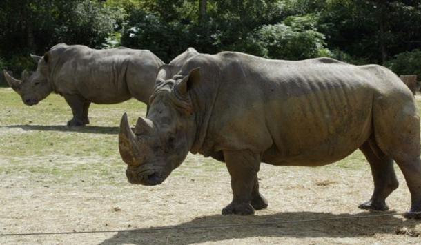 France : Un rhinocéros tué au zoo de Thoiry