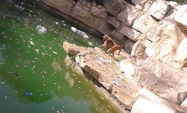 Vols et agressions des animaux au Parc du Belvédère : la déléguée Samia Sahloul explique