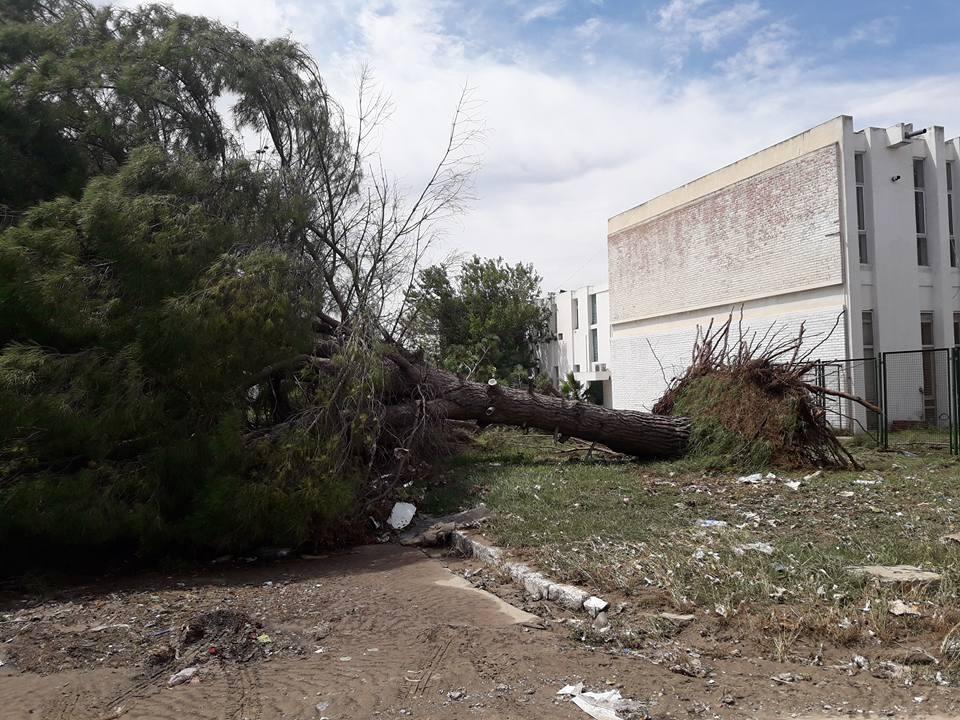 بالصّور، عاصفة مساء أمس تقتلع أشجارا من جذورها