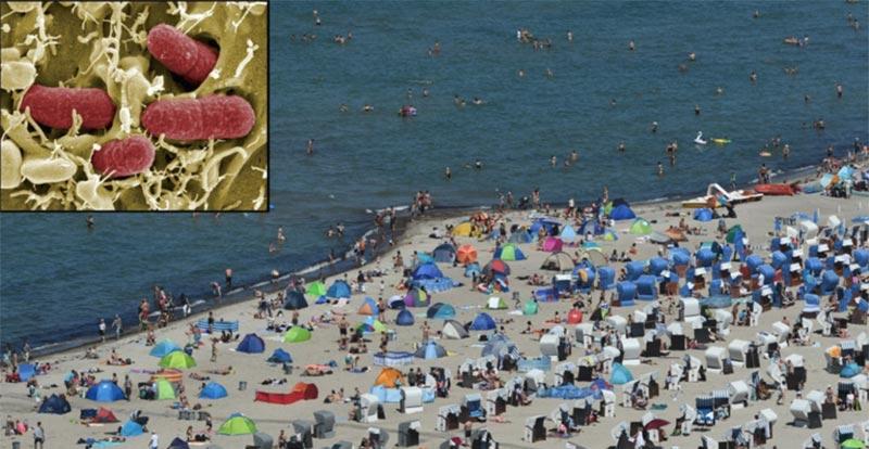 ''كائنات فتاكة''.. وفاة امرأة بطريقة مفزعة على شاطئ ألماني