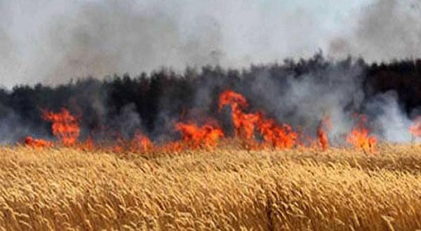 باجة: احتراق آلة حصاد..نجاة السائق و إتلاف 6 هكتارات من الحبوب