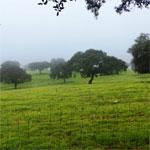Les dernières précipitations à Béja favorables à la réussite de la saison agricole