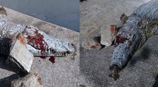 مفاجأة..مصدر بحديقة البلفيدير يكشف حقيقة قتل التمساح !