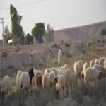 العثور على الراعي المفقود في جبال ورغة