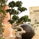 INAUGURATION « BONSAI WOOD STONE»