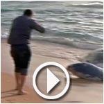 Béja : Un cachalot échoue sur la plage de Zouaraa