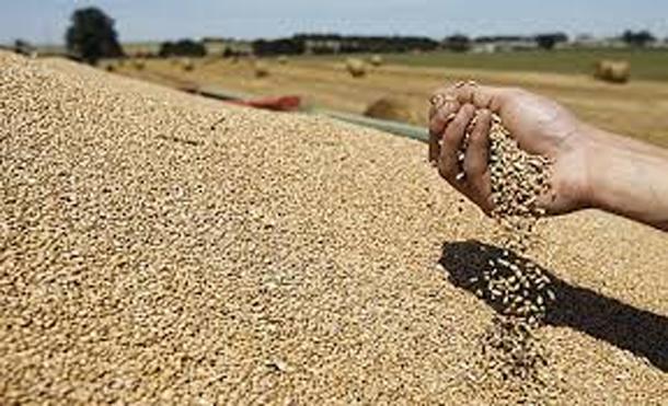 Oussama Khriji : Les dernières pluies n'auront pas d'impact négatif sur la récolte des céréales
