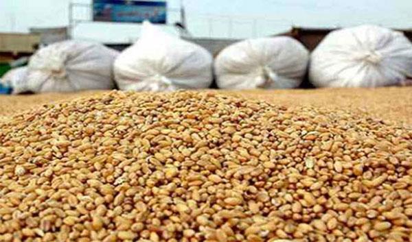 تونس تخصص 600 مليون دينار سنويا لتوريد الحبوب