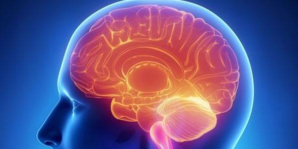 Découvrez les 6 ennemis de notre cerveau, dont le stress, le sucre et les graisses