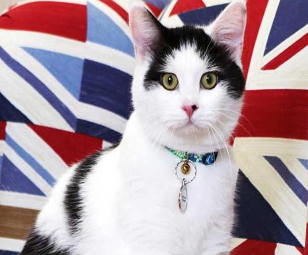 سفارة بريطانيا في عمان تمنح قطا أردنيا منصب كبير صائدي الفئران