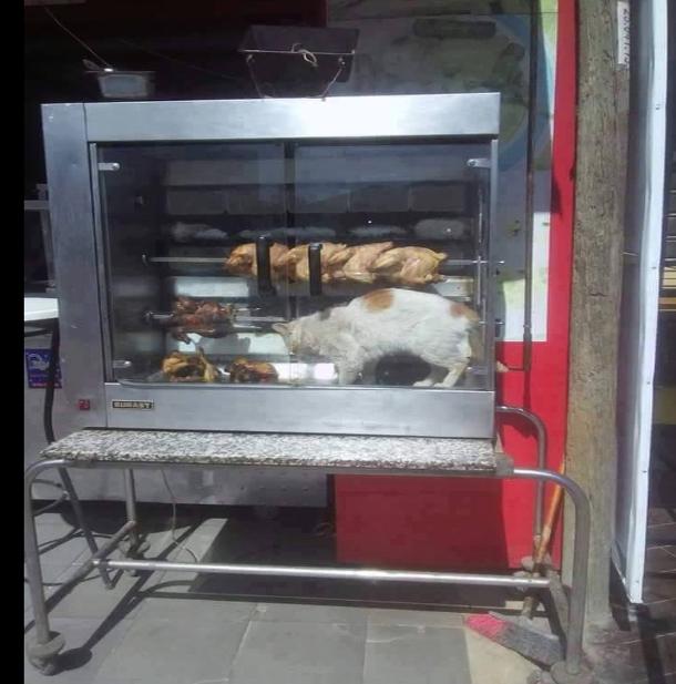 صورة اليوم: قط داخل آلة شي الدجاج الجاهز