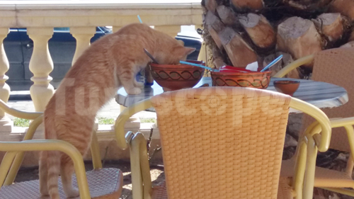 Photo du jour : En Tunisie, même les chats adorent le Lablabi...