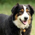 وزارتا الصحة والفلاحة تؤكدان أن الحالة الوبائية لداء الكلب ببرج السدرية تحت السيطرة