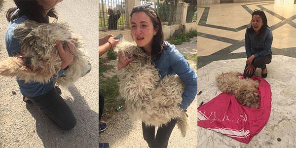صور صادمة، الشرطة البلدية تقتل كلبا صغيرا أمام منزل مالكيه و رئيس بلدية نابل يتدخّل و يعتذر