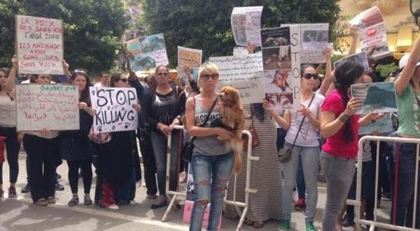 وقفة احتجاجية بشارع الحبيب بورقيبة للتنديد بقتل الكلاب السائبة