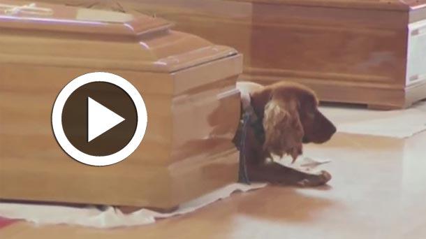 En vidéo : Un chien refuse de quitter le cercueil de son maître décédé dans le séisme qui a secoué l'Italie