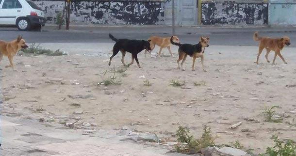 En photos : Les chiens errants envahissent Bizerte