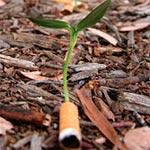 Des mégots de cigarettes qui font pousser une plante pour sauver l'environnement