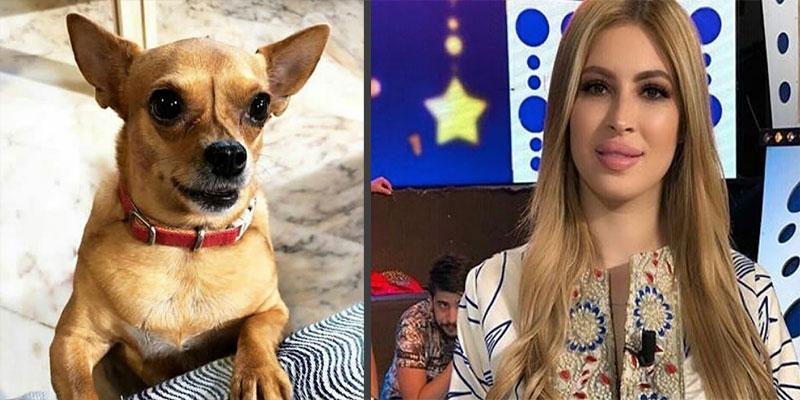Chanou, la chienne de Mariem Dabbegh, suivie par plus de 11 mille abonnés sur Instagram