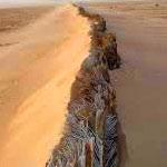 Les habitants d'El-Sabria dénoncent l'absence de lutte contre la désertification