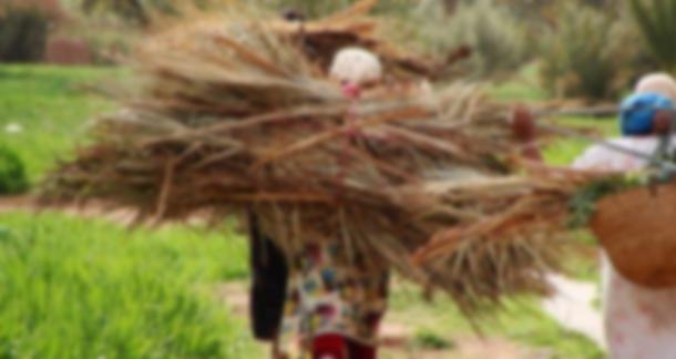 Près de 88% des femmes rurales estiment que l'Etat néglige l'amélioration de leurs conditions