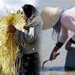 Aujourd'hui le monde célèbre les femmes rurales