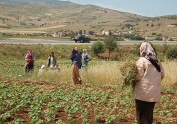 وزيرة المرأة: 32.4% من مجمل نساء تونس يعشن في الوسط الريفي