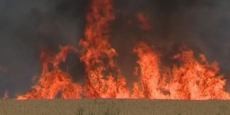 Un pyromane serait derrière l'incendie d'un champ de blé à Siliana