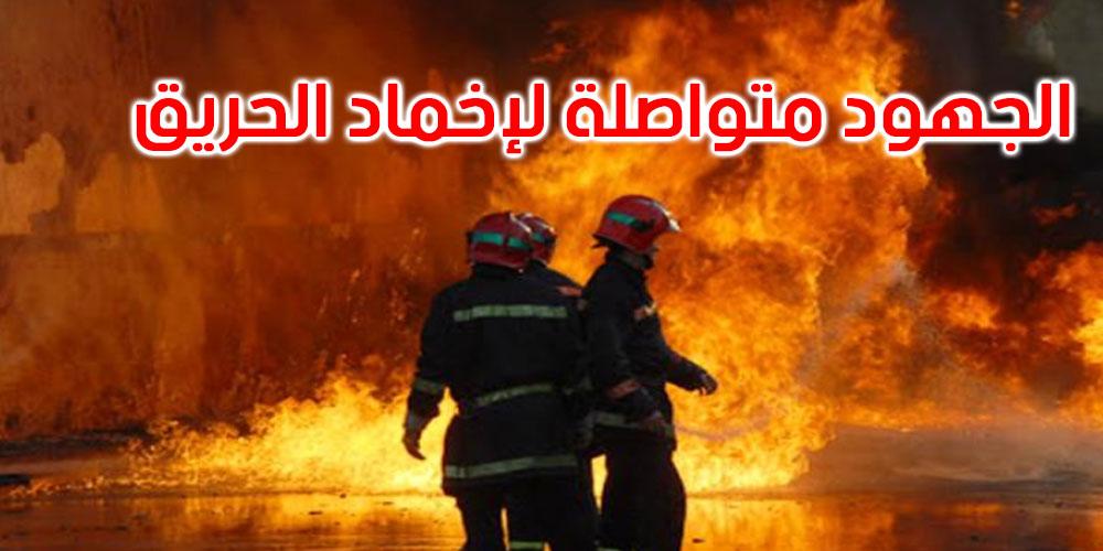سليانة: اندلاع حريق هائل في جبل بوكحيل بالكريب