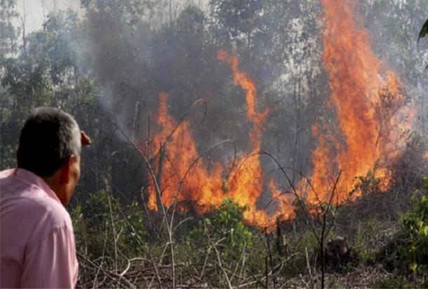 الحكومة الجزائرية تقرر تعويضات لفائدة المتضررين من الحرائق الأخيرة