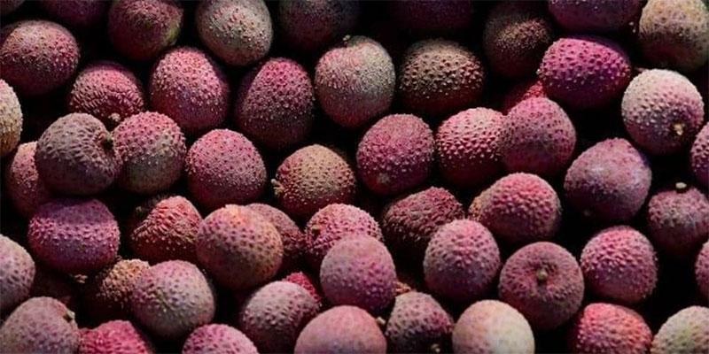 ''الفاكهة القاتلة '' تودي بأرواح عشرات الأطفال في الهند