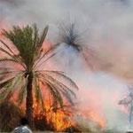 حريق هائل يتلف 284 نخلة بواحة قبلي