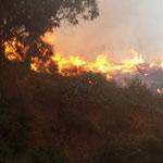Un incendie se déclare à Djebel Tarhouna