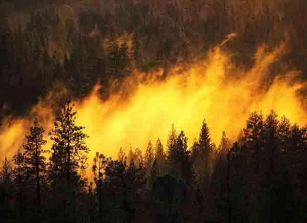 165 incendies de forêts ravagent 456 hectares depuis début juin