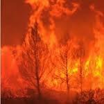 Un incendie ravage 2 hectares de la forêt d'Errimel