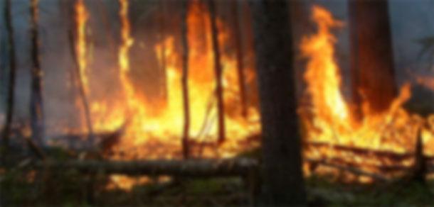 Placement dans un centre d'accueil à Jendouba de 2 adolescents impliqués dans des incendies de forêt