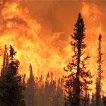 Un incendie à Béja détruit plus de 10 hectares de forêts