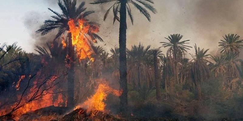 L'ancienne palmeraie de Tozeur ravagée par un incendie