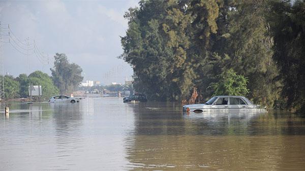 المنستير : نفوق 130 رأس غنم بسبب الأمطار
