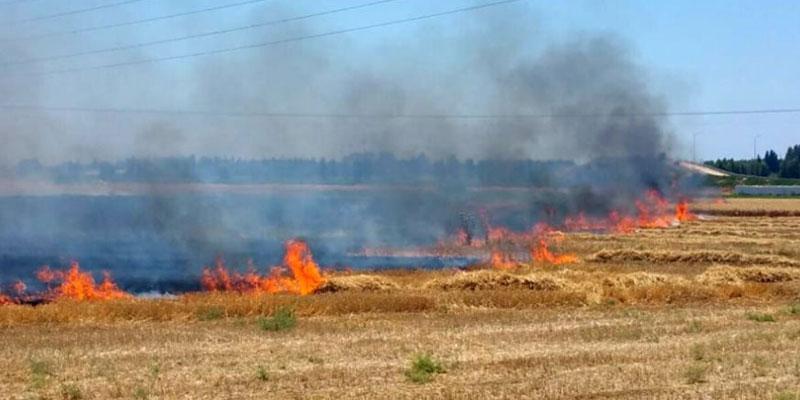 القيروان: إطفاء حريق بجبل الحلفاء