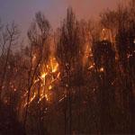 بن عروس : اندلاع حريقين بمرتفعات سيدي فرج وجبل الرصاص